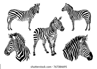 Graphical set  of zebras isolated on white background,vector illustration for tattoo and printing