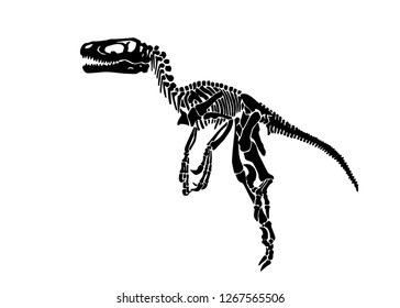 Graphical skeleton of pachycephalosaurus isolated on white background,vector tattoo illustration