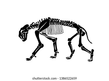 Graphical skeleton of saber-toothed tiger on white background,vector illustration, anthropology