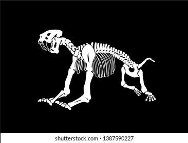 Graphical skeleton of saber-toothed tiger on black background,vector illustration, anthropology