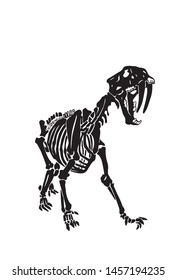 Graphical skeleton of saber-toothed tiger on white background,silhouette,vector illustration, anthropology