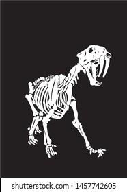 Graphical skeleton of saber-toothed tiger on black background,silhouette,vector illustration, anthropology