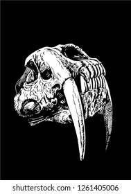 Graphical skull of saber-toothed tiger isolated on black background ,vector sketch