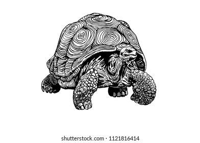 Graphical tortoise isolated on white background,vector illustration, tattoo animal