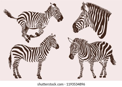 Graphical vintage collection of zebras , tattoo and printing illustration