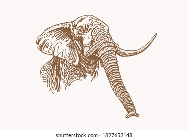 Graphical vintage portrait of elephant , sepia background, vector illustration