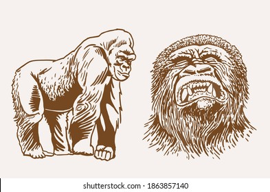 Graphical vintage portraits of gorilla and hyena, sepia background, vector