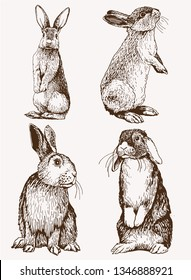 Graphical vintage set of bunnies ,vector retro illustration