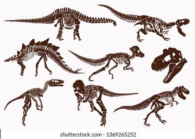 Graphical vintage set of dinosaur skeletons and skulls,paleontology.