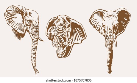 Graphical vintage set of elephants' portraits , sepia background