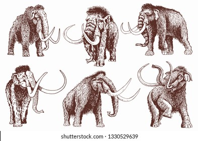 Graphical vintage set of mammoth , retro illustration