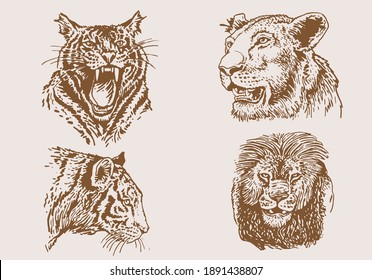 Graphical vintage set of portraits of tigers and lions, sepia background,vector