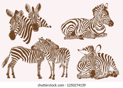 Graphical vintage set of zebras ,graphical illustration