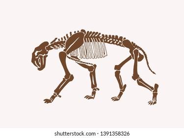 Graphical vintage skeleton of saber-toothed tiger ,vector illustration, anthropology