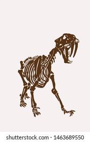 Graphical vintage skeleton of saber-toothed tiger ,silhouette,vector illustration, anthropology