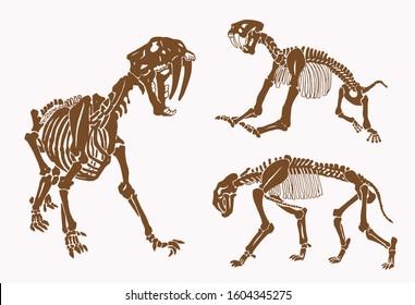 Graphical vintage skeletons of saber tooth tiger, sepia vector illustration