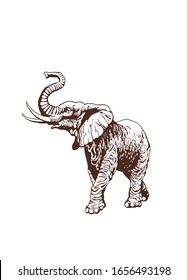 Graphical vintage sketch of elephant , vector sepia illustration