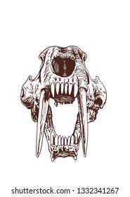 Graphical vintage skull of saber-toothed tiger  ,vector illustration