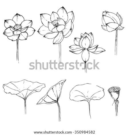Graphics hand drawn set lotus flowers stock vector royalty free graphics hand drawn set lotus flowers mightylinksfo