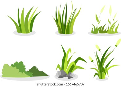 grass assets, type of grass, grass for assets.