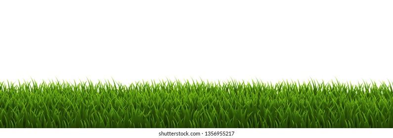 Grass Border White background, Vector Illustration