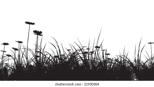 grass field with camomile