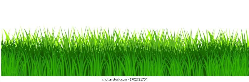 Grass field isolated vector. Green dense juicy lawn grass. Spring Summer. Isolated. Grassland landscape. Meadow. Horizontal Herbs Garden.