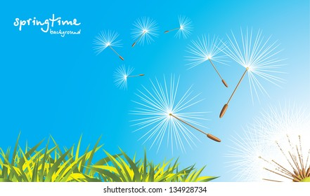 Grass and fluffy dandelion. Vector