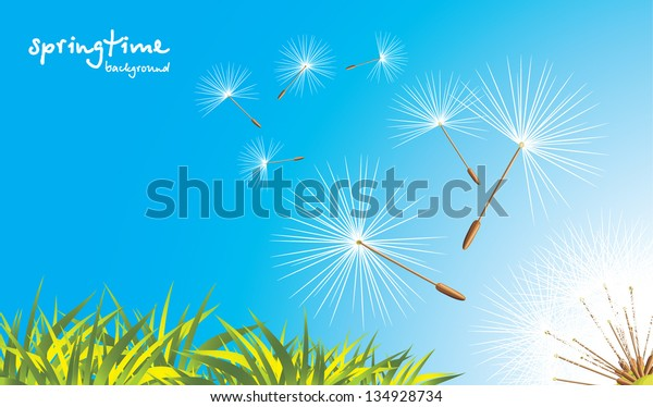 grass-fluffy-dandelion-vector-600w-13492