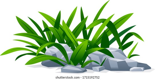 Grass with green long leaves grow around stones in landscape design, detailed green plants on ground isolated illustration, decorative plant composition on ground, dense vegetation in garden