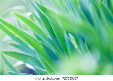 Grass. Vector illustration.