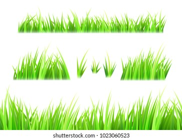 Grass vector isolated on white background. Tufts of grass. Green summer lawn set. Vector illustration