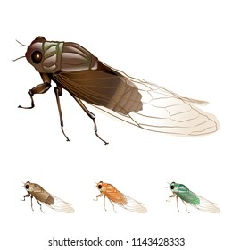grasshopper, beetle, vector