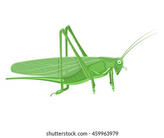 Grasshopper Cartoon vector illustration isolated on a white background