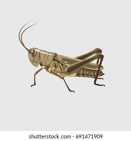 Grasshopper color brown. vector illustration.