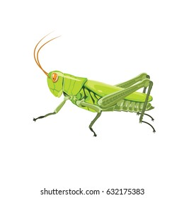 Grasshopper color green isolated on white background, vector illustration.