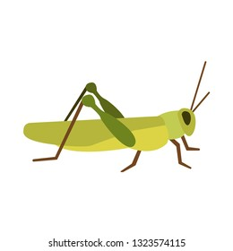 grasshopper flat icon.You can be used grasshopper icon for several purposes like: websites, UI, UX, print templates, presentation templates, promotional materials, web and mobile phone apps