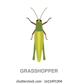Grasshopper  flat icon on white transparent background. You can be used grasshopper icon for several purposes.