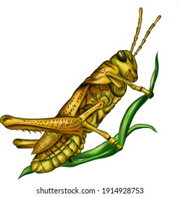 grasshopper insect green vector illustration
