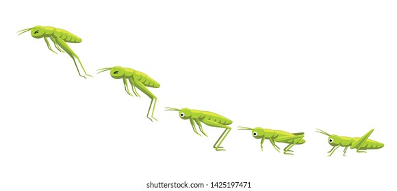 Grasshopper Jumping Frame Sequence Animation Cartoon Vector Illustration