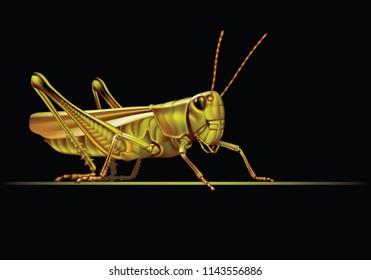 Grasshopper on a black background  [Tettigoniidae]