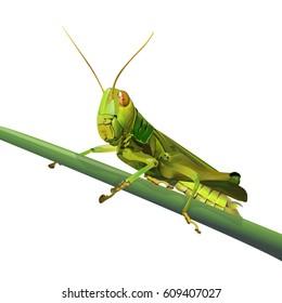 Grasshopper on grass isolated on white background, vector illustration.