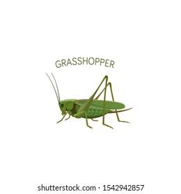 Grasshopper Vector Illustration. Cartoon grasshopper isolated on white background