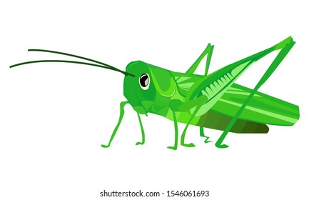 Grasshopper with white background, vector