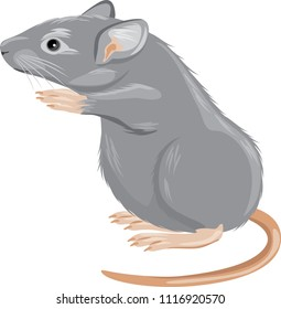 Gray mouse isolated on white. Vector
