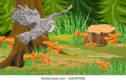 Gray owl tawny in the autumn forest. Trunks of mist and trees, forest mushrooms chanterelles, stones. Wild birds of the forest. Realistic Vector Landscape