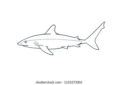 Gray reef shark fish predator vector zoological naturalistic illustration outline isolated on white
