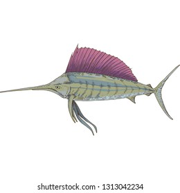 Gray Sailfish with Violet Fin. Isolated on White