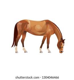 Grazing chestnut horse. Vector illustration isolated on white background