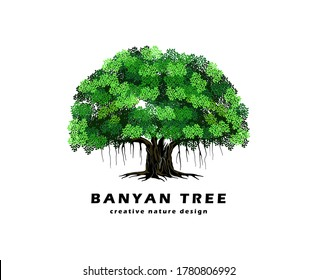 Great of banyan tree vector illustration. hanging roots of a plant.